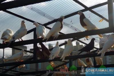 Инструкция по применению препарата Лозеваль для голубей