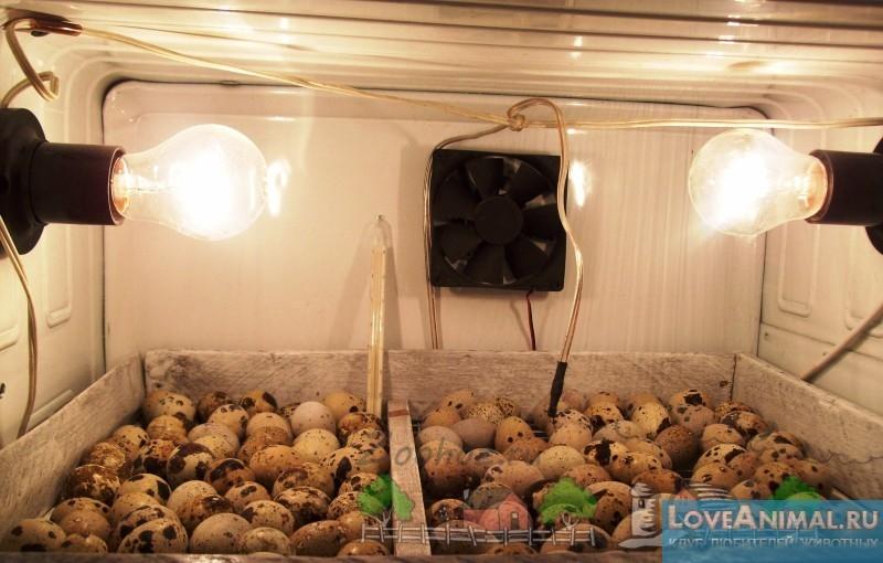 Инкубаторы для перепелиных яиц своими руками видео