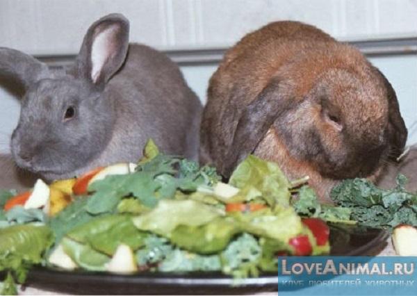 Как питаются кролики в домашних условиях
