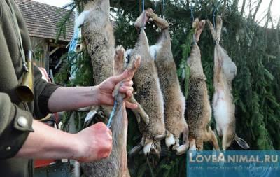 Правильная выделка шкуры кроликов