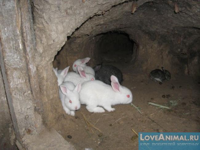 Фото ямы для кроликов своими руками