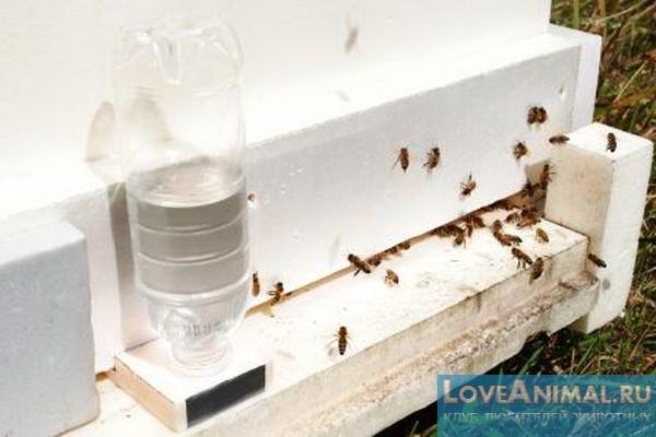 Поилка для пчел из пластиковой бутылки своими руками видео