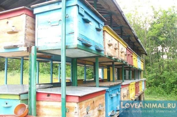 Павильон для пчел своими руками чертежи фото 635