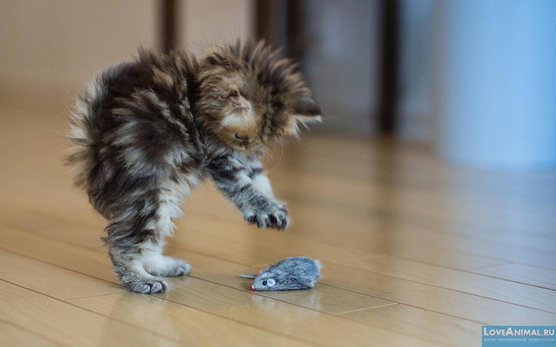 Картинки по запросу игры котят фото