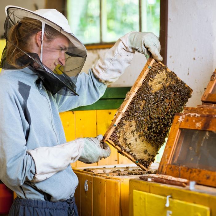 Картинки по запросу инвентарь для пчеловода описание что такое