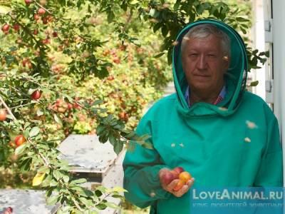 Пасека Савина и его уникальная методика лечения пчёлами