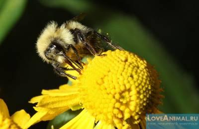 Чему у пчелы можно поучиться