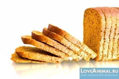 Кормим кролика хлебом правильно