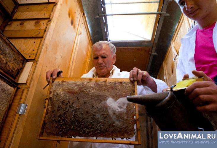 Берендей павильон для пчел