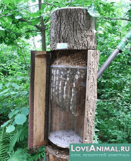 Дуплянка для пчел своими руками
